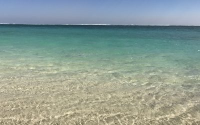 Ningaloo Reef (WA) – A Cut Above the Rest